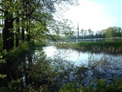 Tapeta: rybník z jara