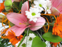 Tapeta S lilií