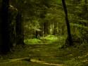 Tapeta Schwarzwald 2