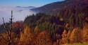 Tapeta Schwarzwald 3