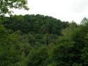 Tapeta Seč-lesy kolem přehrady