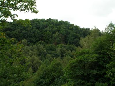 Tapeta: Seč-lesy kolem přehrady