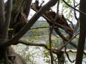 Tapeta Seč-Oheb-výhled na přehradu 16