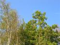 Tapeta Seč-ostrov-koruny stromů