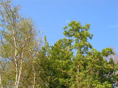 Tapeta: Seč-ostrov-koruny stromů