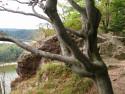 Tapeta Seč-strom na skále pod Ohebem