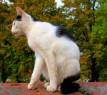 Tapeta sedící macík