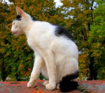 Tapeta: sedící macík