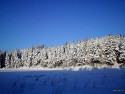 Tapeta Severské zimy