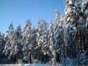 Tapeta Severské zimy 14