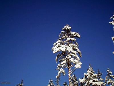 Tapeta: Severské zimy 2