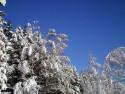 Tapeta Severské zimy 3