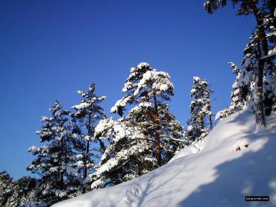 Tapeta: Severské zimy 4