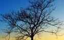 Tapeta Silueta stromu při západu slun
