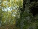 Tapeta Skála v lese