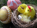 Tapeta Slepička a vajíčka