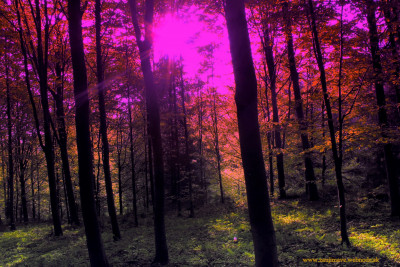 Tapeta: slnečné lúče