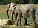 Tapeta Sloníčci