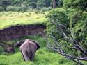 Tapeta Sloníčci 2