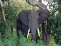 Tapeta Sloníčci 4