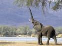 Tapeta Sloníčci 8