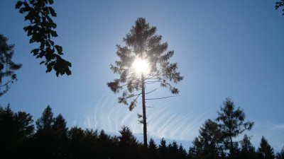 Tapeta: Slunce a Modřín