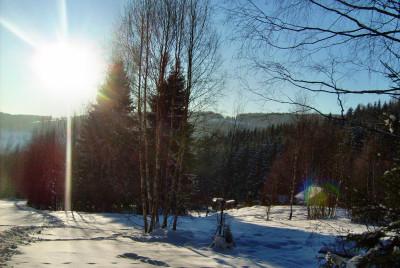Tapeta: slunce nad zasnezenym lesem