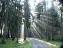 Tapeta Slunce v lese