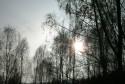 Tapeta Slunce vykukujici za stromy