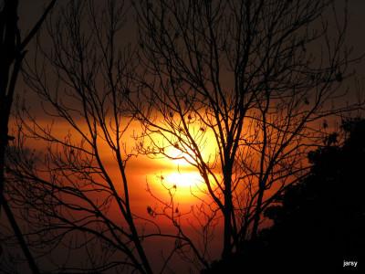 Tapeta: slunce za stromy