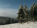 Tapeta smrčky a sníh