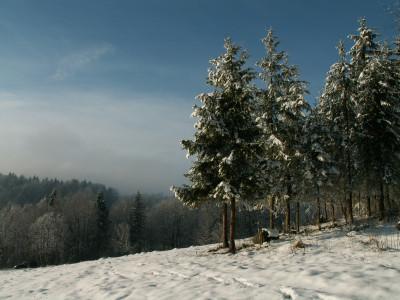 Tapeta: smrčky a sníh