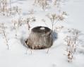 Tapeta Sněhový pařez