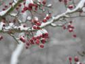 Tapeta Sněží