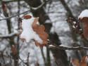 Tapeta Sníh na listu