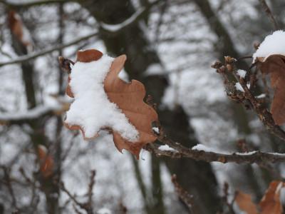 Tapeta: Sníh na listu