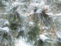 Tapeta Sníh na stromě