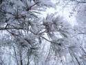 Tapeta Snížek
