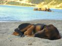 Tapeta Spící štěně