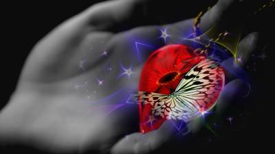 Tapeta: srdce na dlani