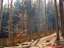 Tapeta Stíny stromů