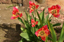 Tapeta Strakaté tulipány