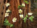 Tapeta Strom a květiny