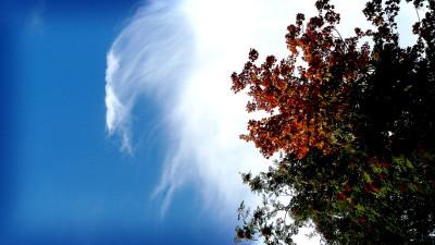 Tapeta: Strom na nebi
