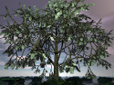 Tapeta strom na peníze