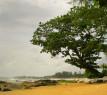 Tapeta Strom na pláži
