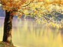 Tapeta strom nad jezerem