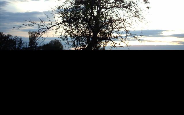 Tapeta strom_obklopeny_mraky