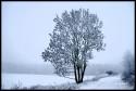 Tapeta strom samotář