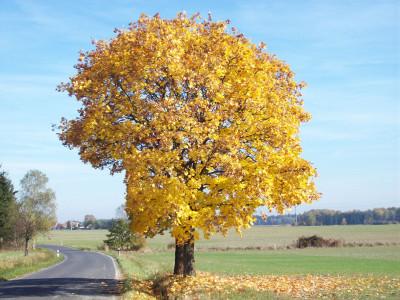 Tapeta: Strom u cesty